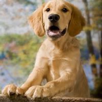 barrieres pour chien
