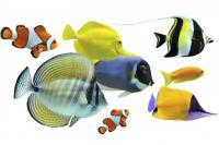especes de poissons d aquarium