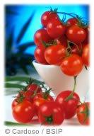 Super-tomate anti-cancer